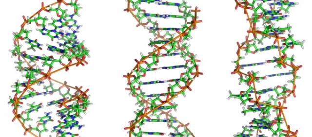 Milyen típusai ismertek a rákkal összefüggő genetikai hibáknak?, Rák genetikai készlet